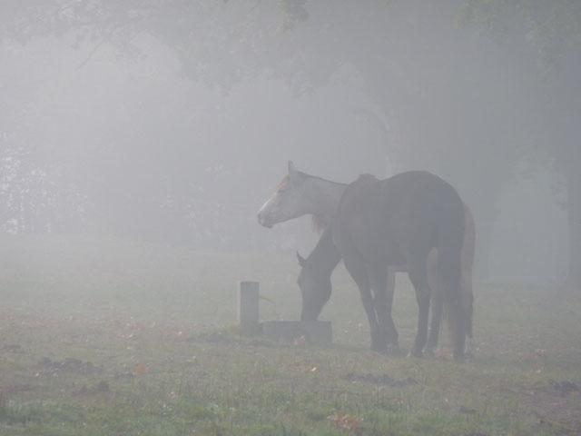 pferde Oktober 09 009.JPG